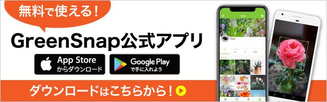 無料で使える公式アプリのダウンロードはこちら