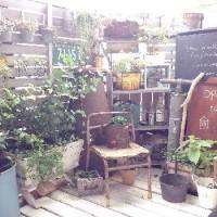 初心者にやさしいガーデニングのキホン(2)花を置く場所はどこがいい?の画像