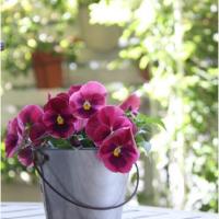 初心者にやさしいガーデニングのキホン(3)花がしぼんでしまったらどうするの?の画像