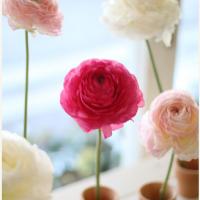 ハッとする美しさ。薄い花びらが重なり合う、今が旬のラナンキュラスの魅力の画像