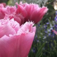 フォトグラファーに聞く、花を美しく撮る目からウロコな撮影法&iPhoneテク7選!の画像