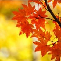 【素朴なギモンシリーズ②】どうして秋になると、葉っぱが赤く紅葉するの?の画像