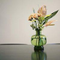 花も綺麗なポポラスをご紹介!の画像