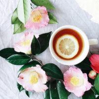 紅色の花に雪が積もる姿が幻想的。冬に美しく咲く「寒椿」が見頃!の画像