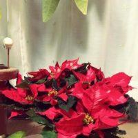 雑貨にも使える!ポインセチアでクリスマスを華やかに!の画像