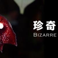 珍奇植物のビザールプランツとは?様々な種類を集めました!の画像