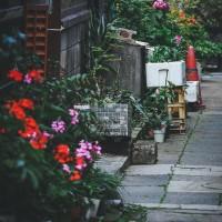 探せ!日本の民家でよく見かける『国民的多肉植物』5選の画像