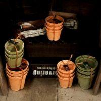 植木鉢と鉢カバー、多肉植物にはどっちが良い?の画像