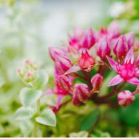 こんな可愛い花が咲くなんて♡ 秋に花を咲かせる多肉植物8選の画像