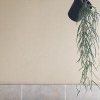 これで図鑑いらず?色々な多肉植物をご紹介の画像