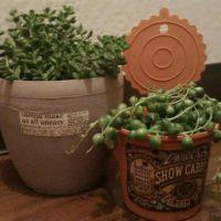 おしゃれな多肉植物、厳選集!おすすめベスト5の画像