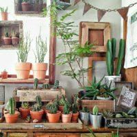 室内グリーン化計画!の画像