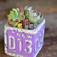 多肉植物のディスプレイのアイデアをご紹介!の画像
