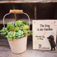 寄せ植えにおすすめ!多肉植物の鉢3選の画像