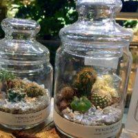 ブリキ、缶、陶器、鉢カバー。多肉植物のおしゃれな見せ方の画像