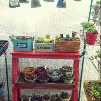 多肉植物を箱庭できれいに寄せ植えしよう!の画像