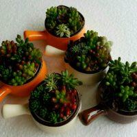 めっちゃ可愛い!ミニ多肉植物で自分の植物園を作ろう!の画像