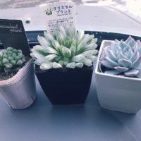 かわいい花を咲かせる多肉植物の種を販売店から買ってみよう!の画像