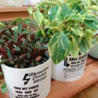 日陰を好む植物3選!の画像