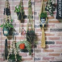 吊るしてグンと可愛く見せる!ハンギングで飾りたい垂れる植物10選の画像