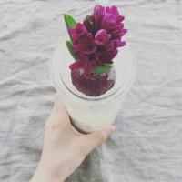 お部屋で育てるヒヤシンスってステキ!水栽培が楽しめる球根花5選の画像