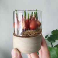 お部屋で水栽培を楽しもう!球根花おすすめ5選の画像