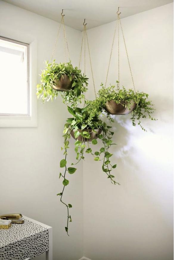 plants dislay