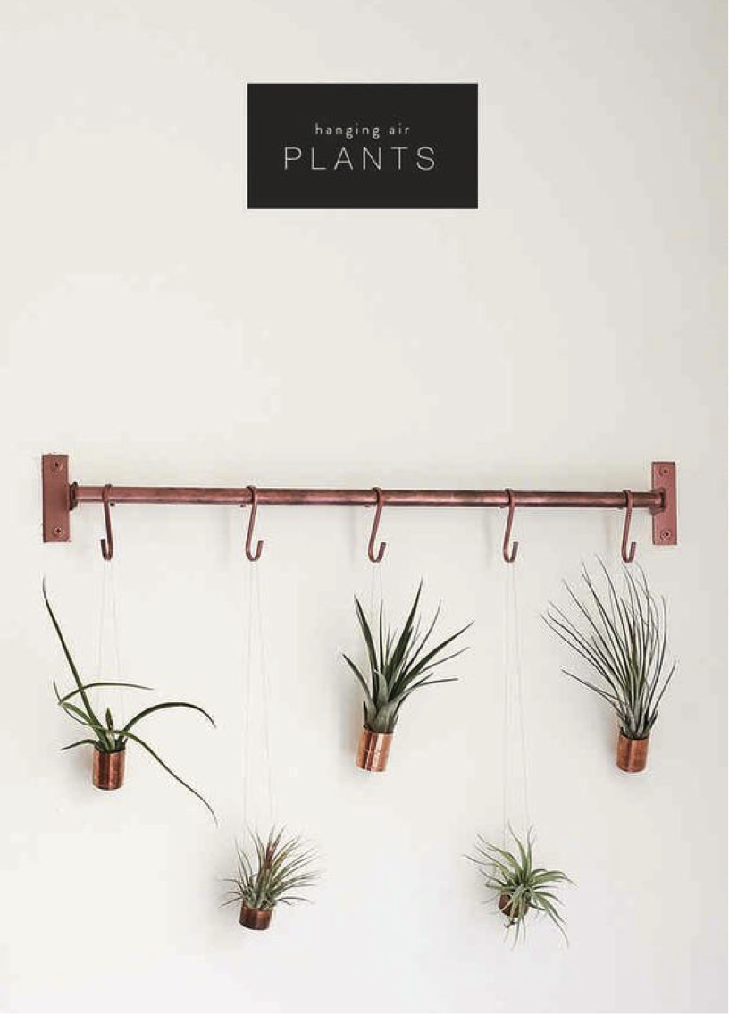 planst display