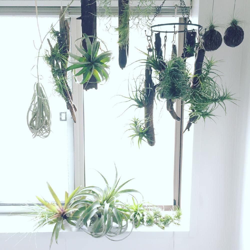 plants display