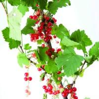 季節のインテリアコーディネートに欠かせない、枝もの・実ものアレンジメント レッド編の画像