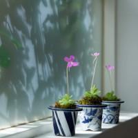 江戸時代の園芸鉢を、モダンインテリアにあわせてみた!の画像