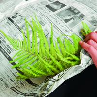これを知れば、グリーンの扱いがうまくなる!葉物の水揚げ&管理のコツ3の画像