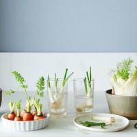 インテリア感覚の家庭菜園♡「リボベジ」を初めてみませんか?の画像