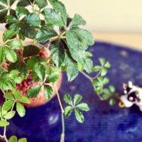 小さい観葉植物を飾ろう!おしゃれな種類や水やりと植え替えのコツとは?の画像