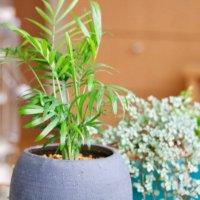 ミニ観葉植物20選!卓上に飾れるおしゃれな小さい種類とは?の画像