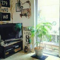 ワンルームやリビングにおすすめの観葉植物!の画像