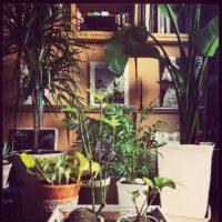 オシャレ空間を演出!インテリアにおすすめな植物を紹介!の画像