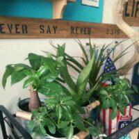 園芸にオススメな観葉植物を紹介!の画像