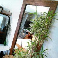 人気の観葉植物ソングオブインディアナの特徴と育て方の画像