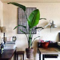 幹から葉っぱまで、大きい観葉植物の画像