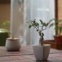モダンなインテリアで飾る観葉植物の画像