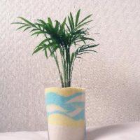 小さめサイズで愛らしい!おすすめのミニチュア観葉植物!の画像
