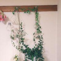 観葉植物を自家生産!?観葉植物の増やし方講座!の画像