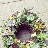 プレゼントはコレで決まり!お祝いにぴったりな観葉植物3選!の画像