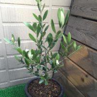 ガーデニングにおすすめの人気植物TOP3!の画像