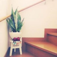 インテリアにおすすめな観葉植物6選!!の画像