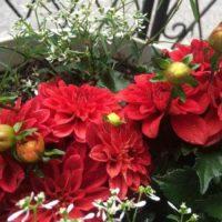 新築祝いにおすすめの観葉植物を贈ろう!の画像