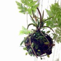 初心者にもおすすめ!観葉植物のシノブについての画像
