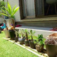 室内の観葉植物を選ぶときのポイントとは?の画像