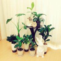 暗い部屋でも安心!おすすめの室内用植物についての画像